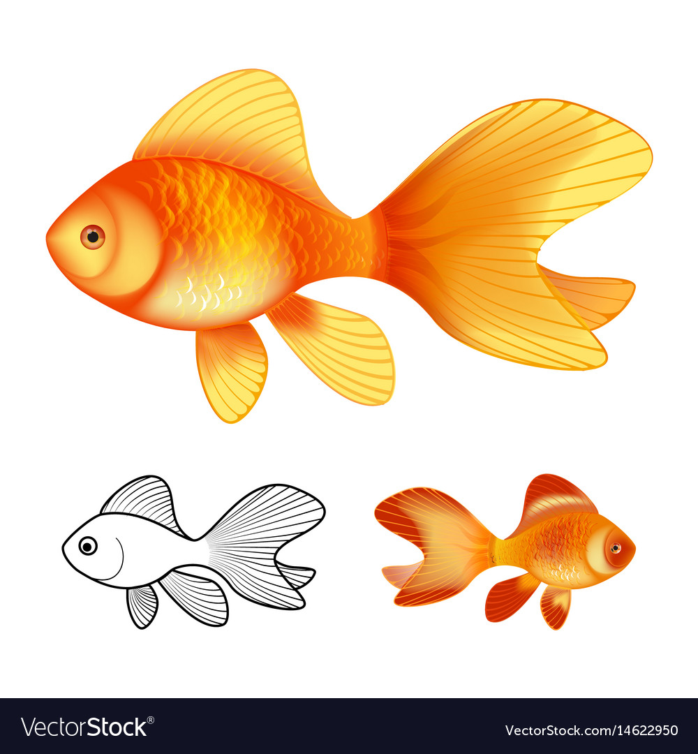 3d of goldfishes isolated on white vector image