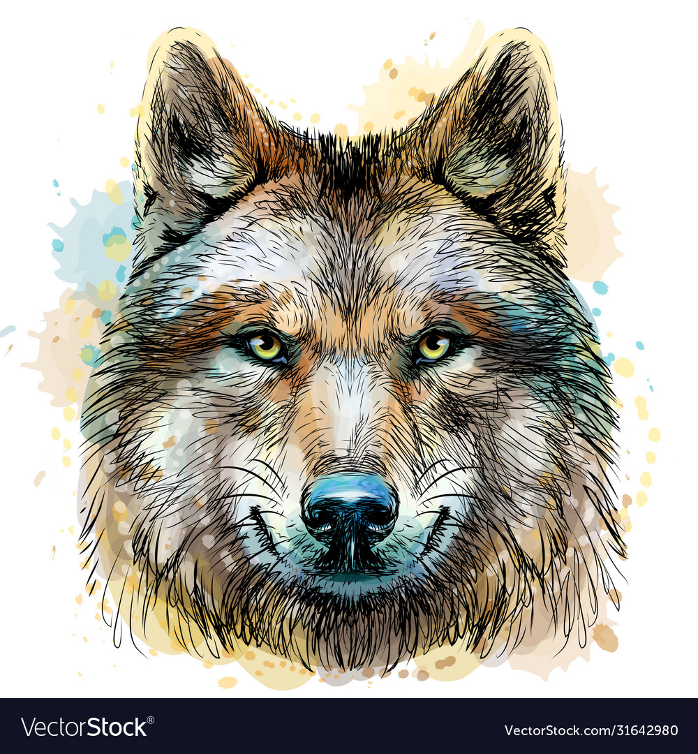 Sketchy graphical color portrait a wolf head