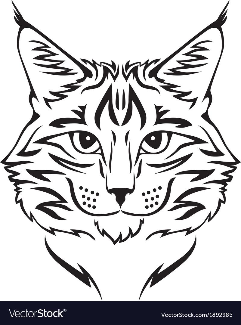 Beauty cat vector image