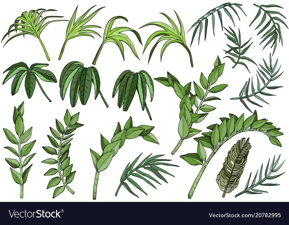 Tropical palm jungle plants set