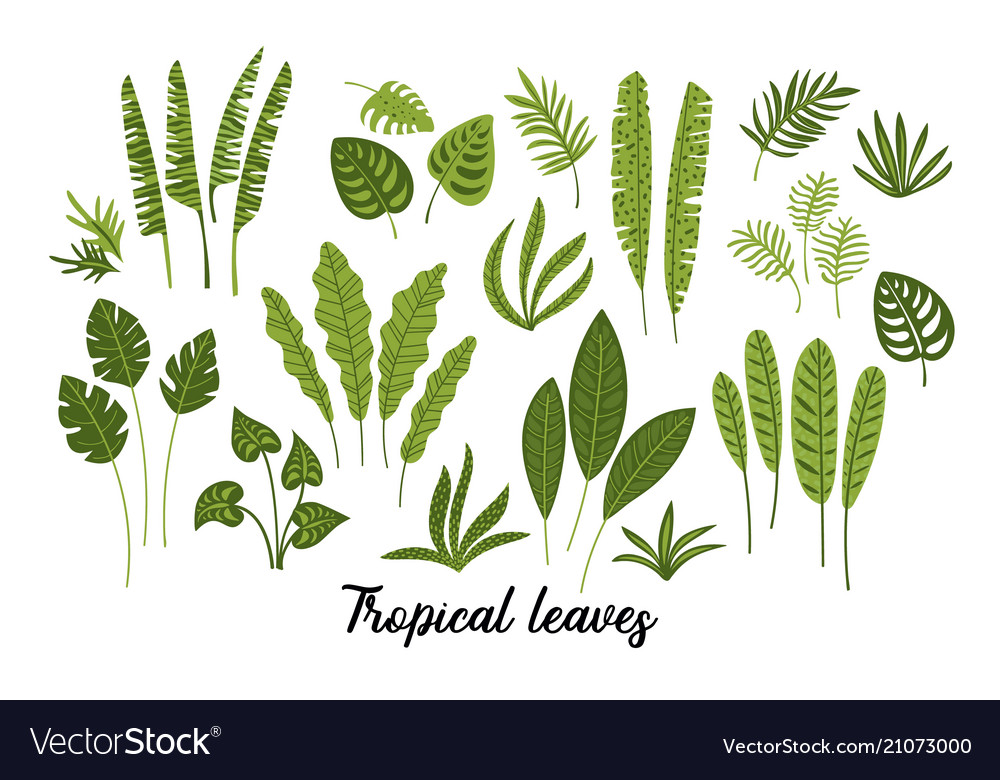 Set abstract tropical leaves