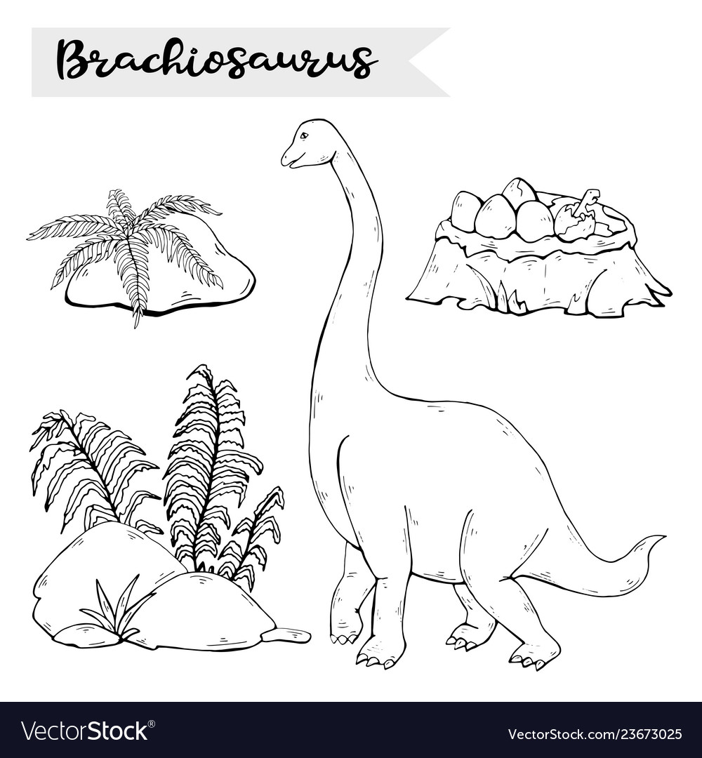 Brachiosaurus with plant and stone isolated