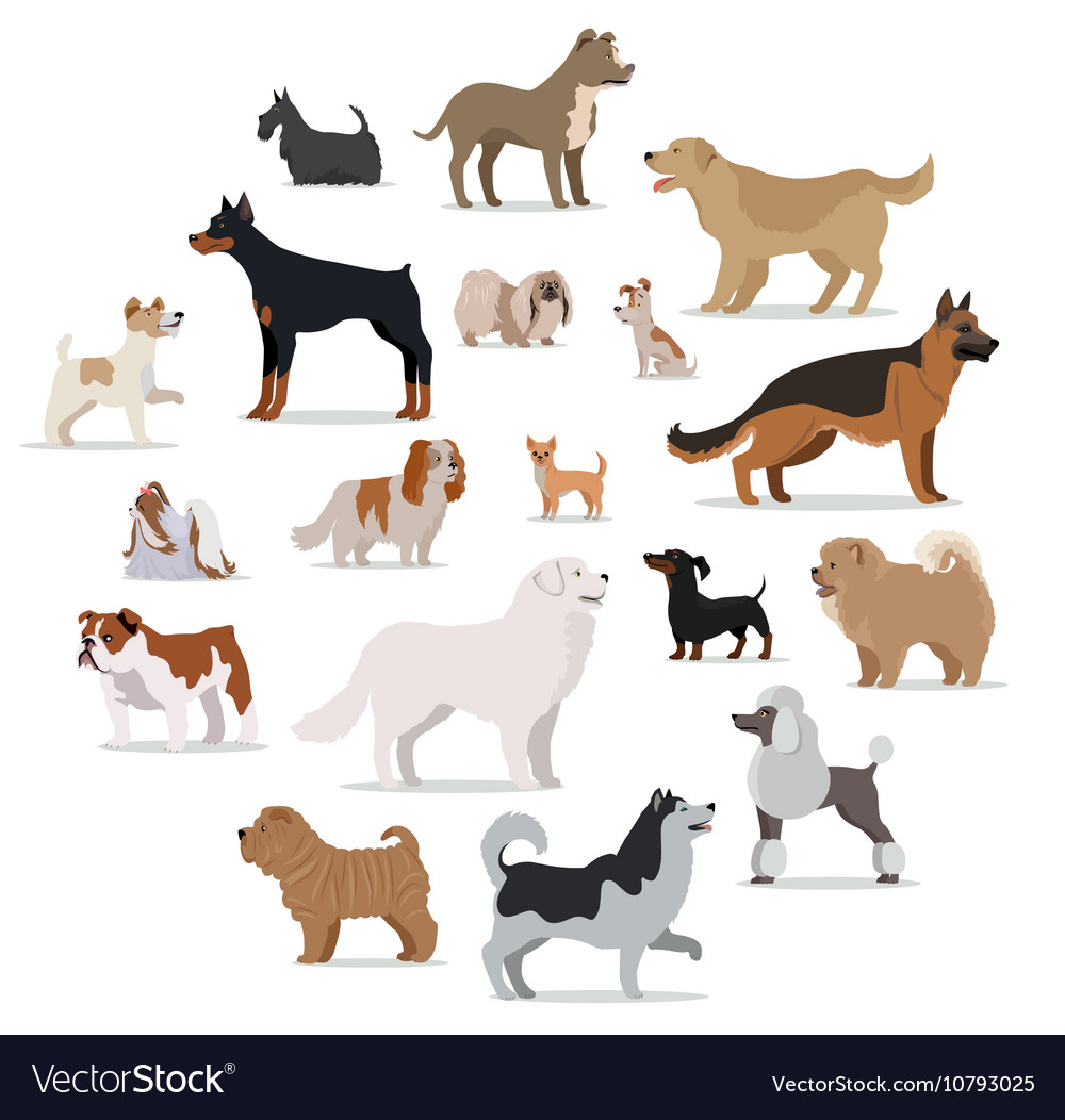Dogs Breed Set in Cartoon Style Isolated on White vector image