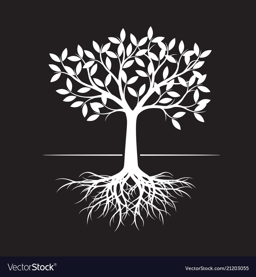 White Tree With Root On Black Background Vector Image