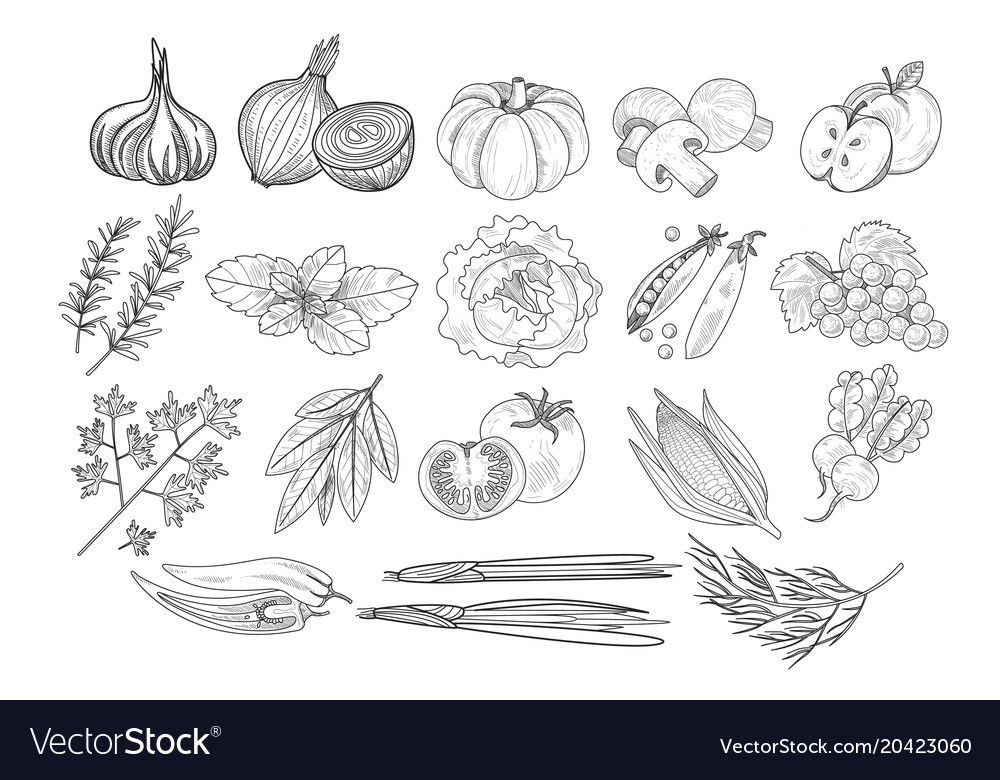 Set of fruits vegetables and herbs in