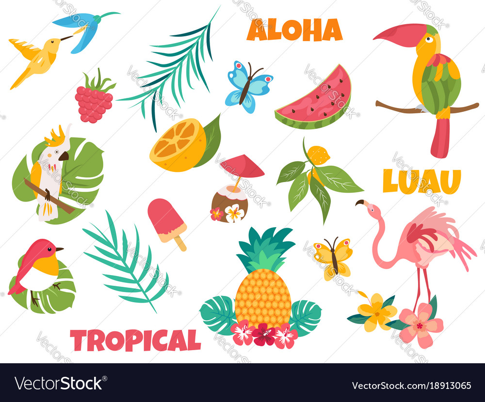 Big set of tropical birds and elements