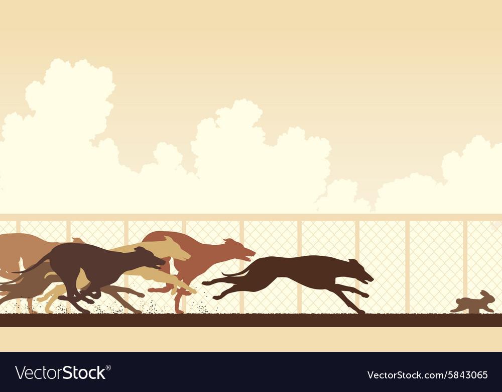 Greyhound dog race