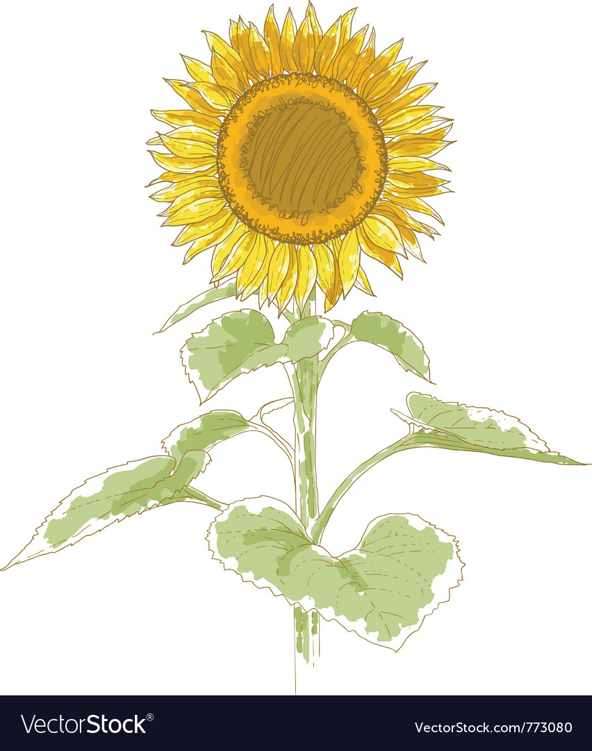 Hand-drawing sunflower