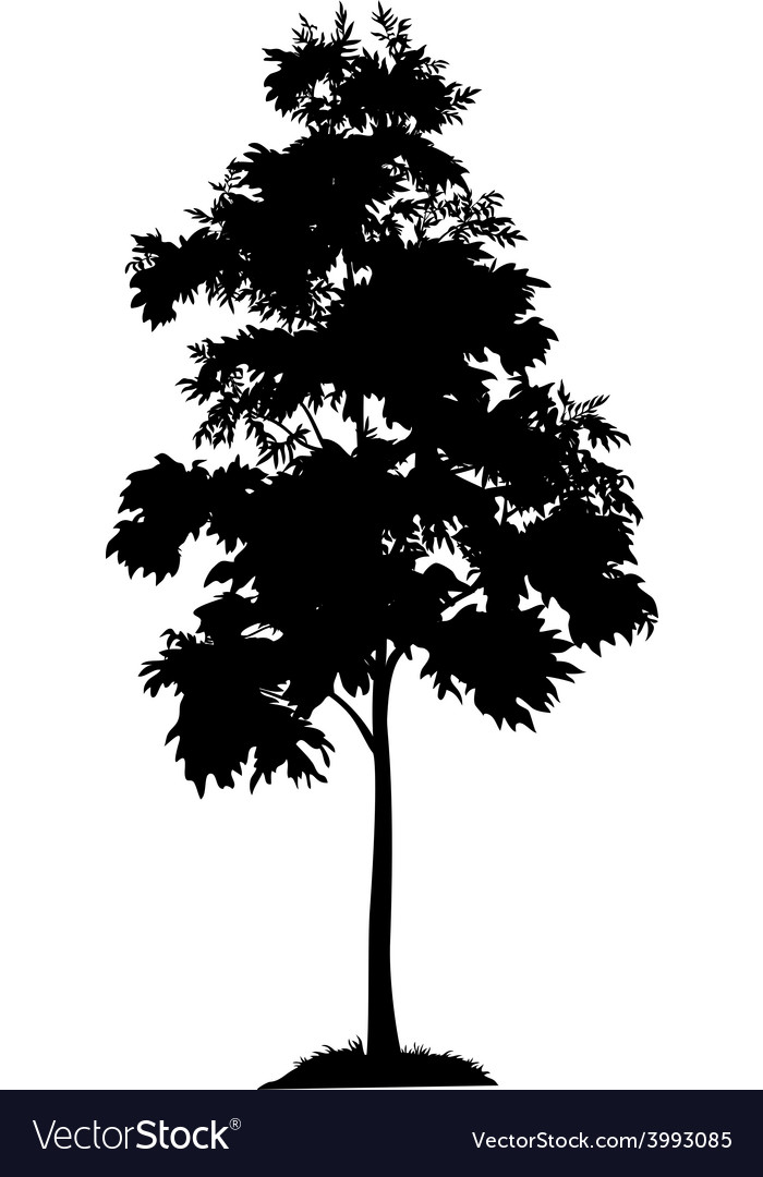Acacia Tree And Grass Silhouette Royalty Free Vector Image