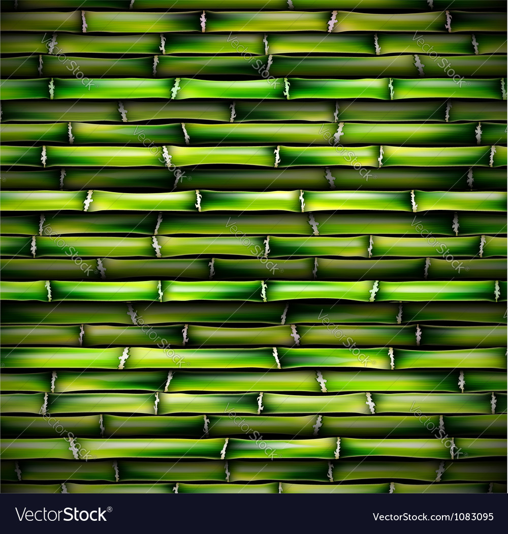 Background of bamboo vector image