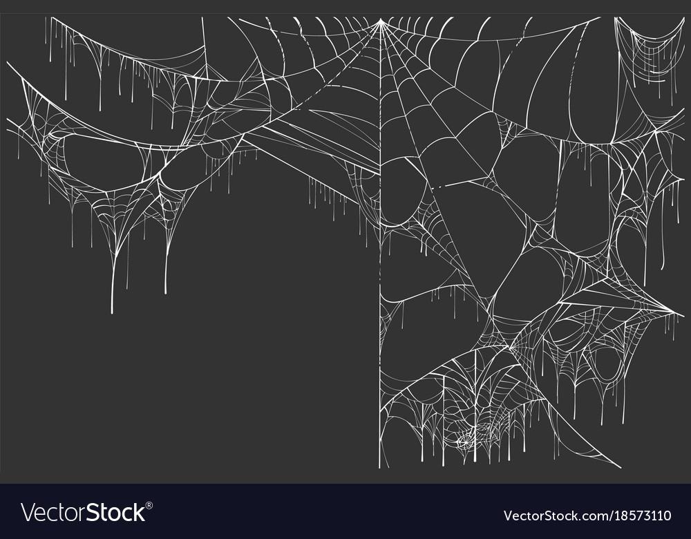 large white torn spider web on black background vector image