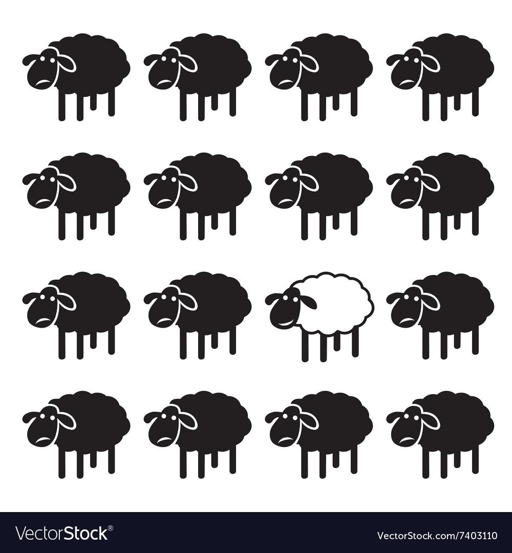 Sheep concepts
