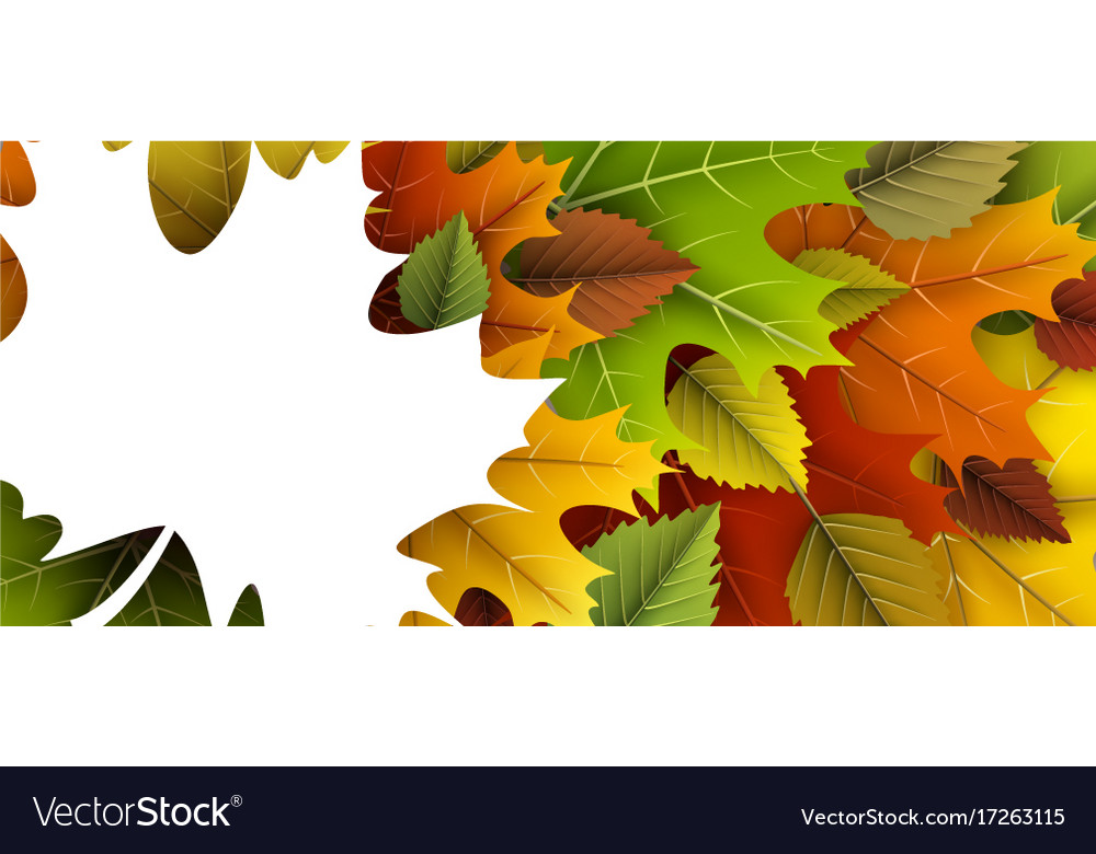 Autumn banner with colorful leaves