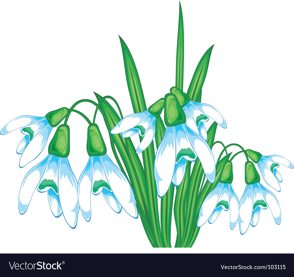 Snow flowers vector image