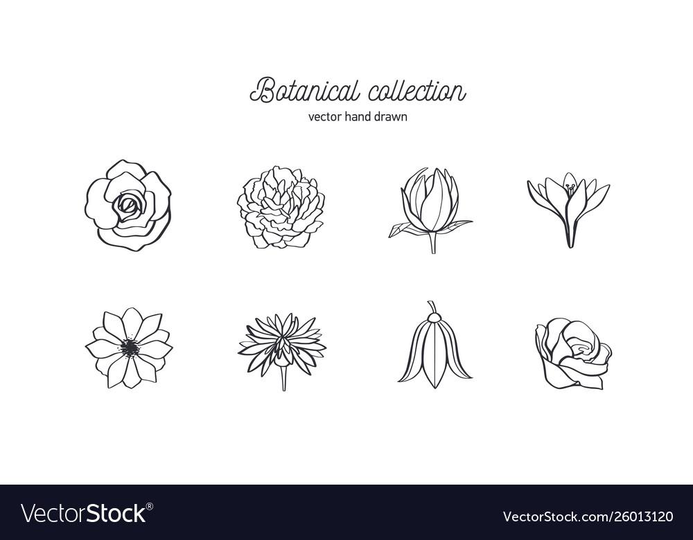 Hand drawn set wild flowers roses