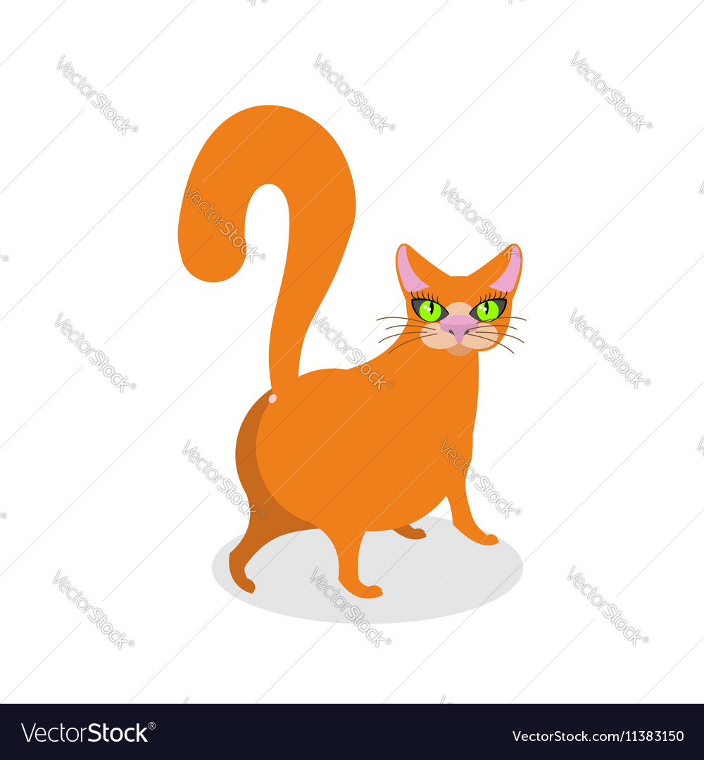 Red cat ass Happy pet Thick Animal back