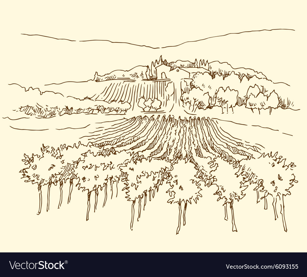 Hand made sketch grape fields and vineyards