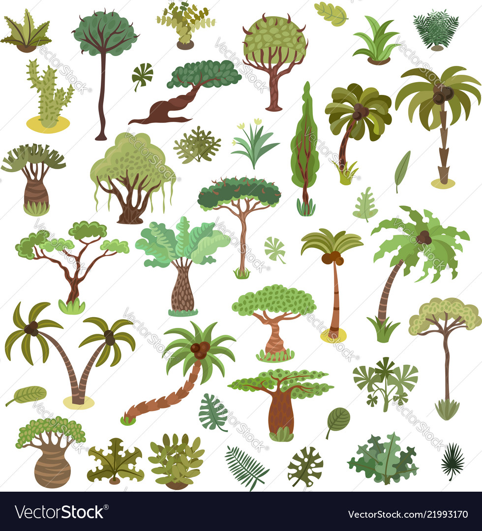Collection tropical trees palms and other