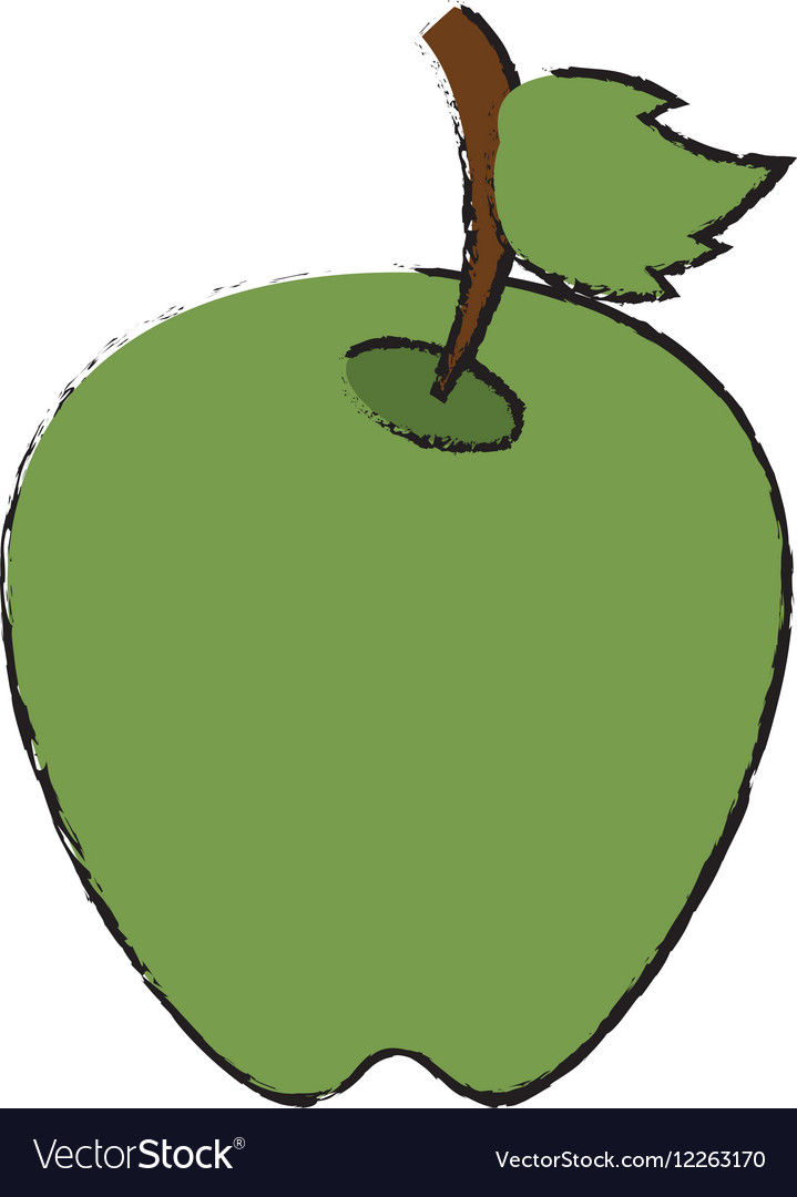 Drawing green apple leave fruit vector image