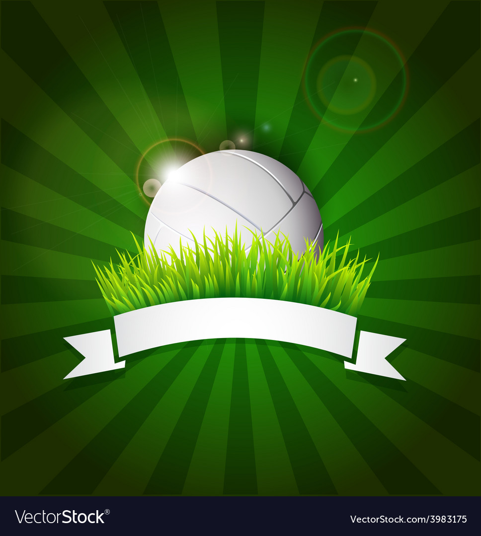 Volleyball ball on field grass vector image