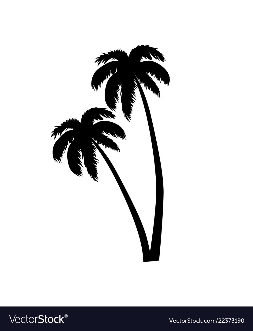 Palm tree leaves silhouette