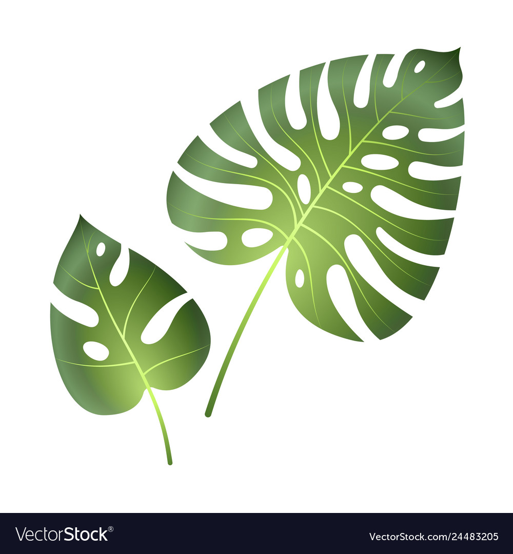 Monstera Tropical Leaves Jungle Palm Plants Vector Image Countries with tropical pitcher plants include indonesia, philippines, sumatra, new caledonia. vectorstock