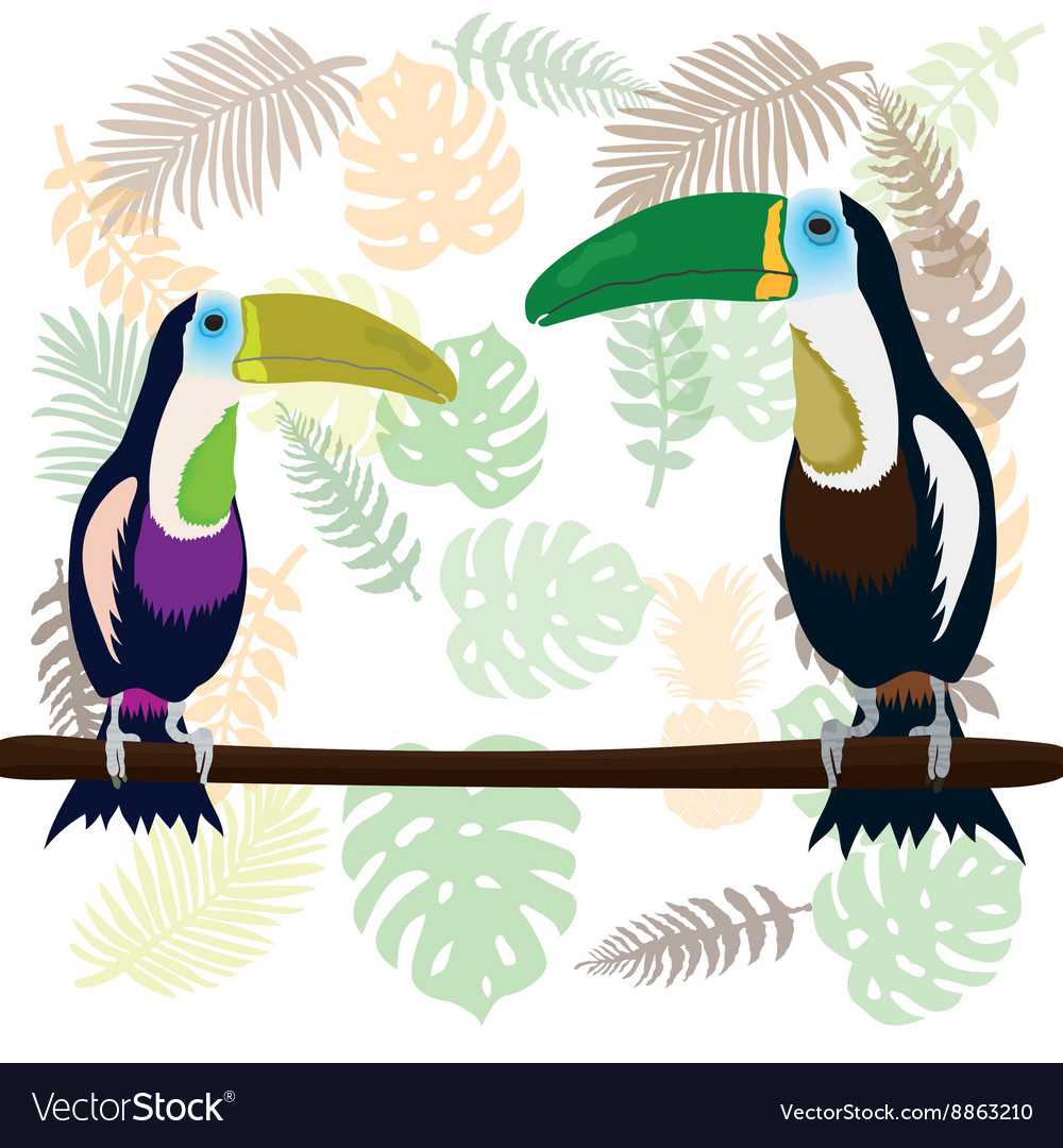 A couple of toucans