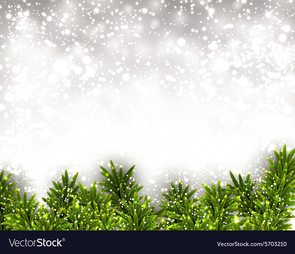Fir christmas background