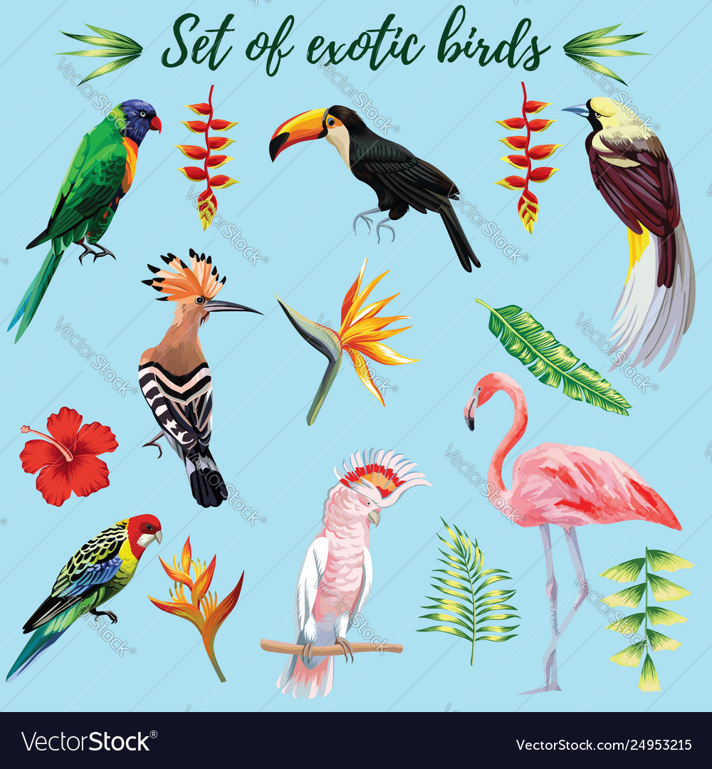 Set exotic birds