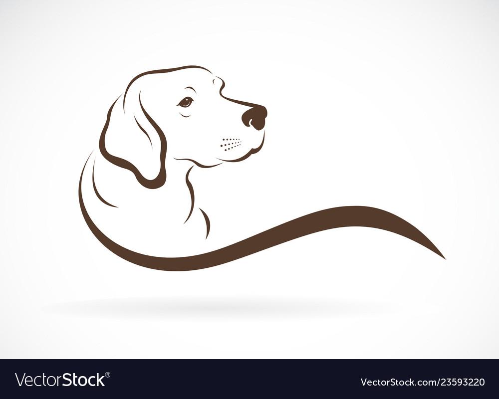 Dog headlabrador on white background pet animals