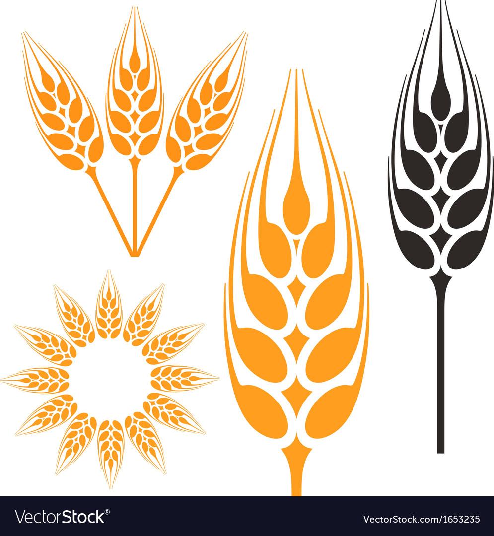 barley royalty free vector image vectorstock rh vectorstock com barley vector barley vector