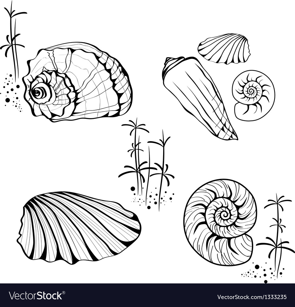 Sea Shell and Snail Collection