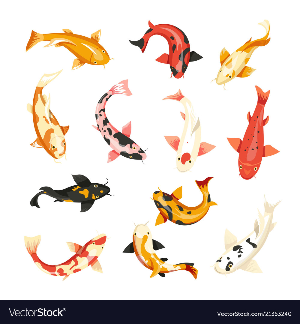 Carp fish icons top view