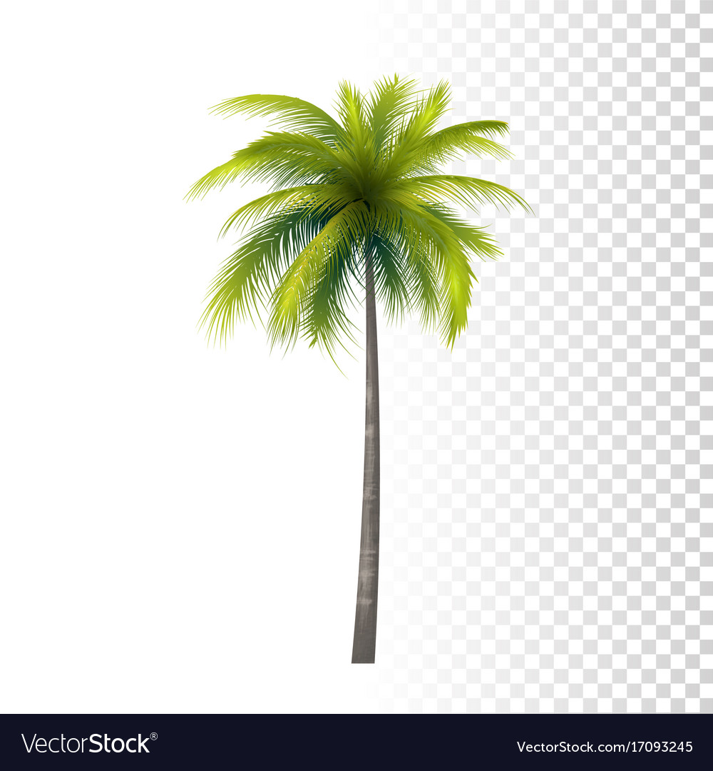 coconut palm tree royalty free vector image vectorstock