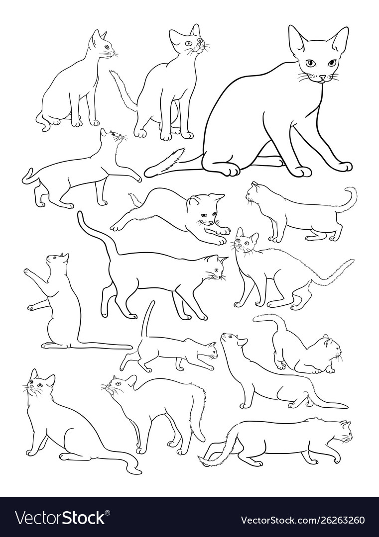 Cats line drawing