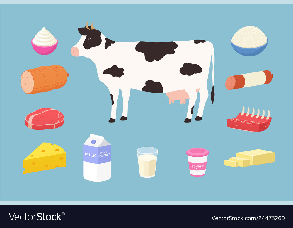 Dairy products and meat products from cows