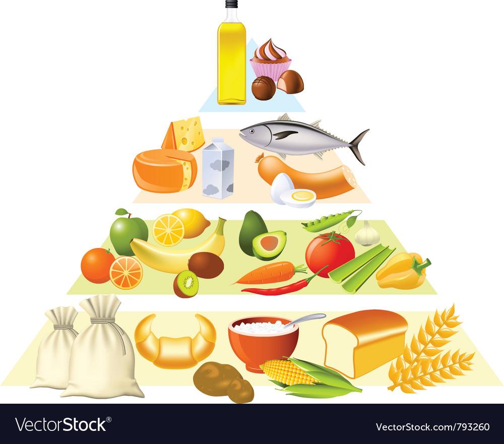 Food pyramid vector image