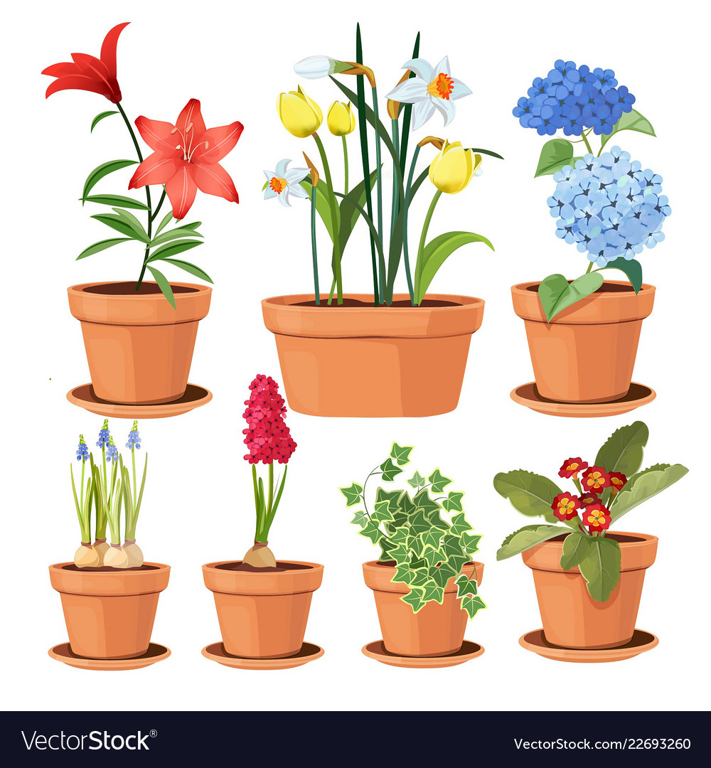 Modern Flower Pots Colored Decorative Plants Tree Vector Image
