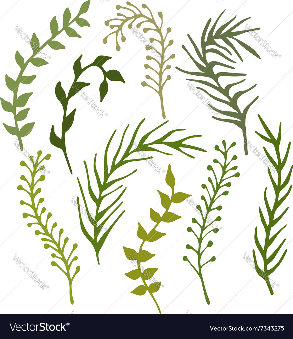 set of hand drawn branches plants and seaweed vector image rh vectorstock com seaweed vector free seaweed vector download
