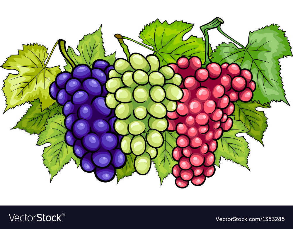Bunches of grapes cartoon Royalty Free Vector Image