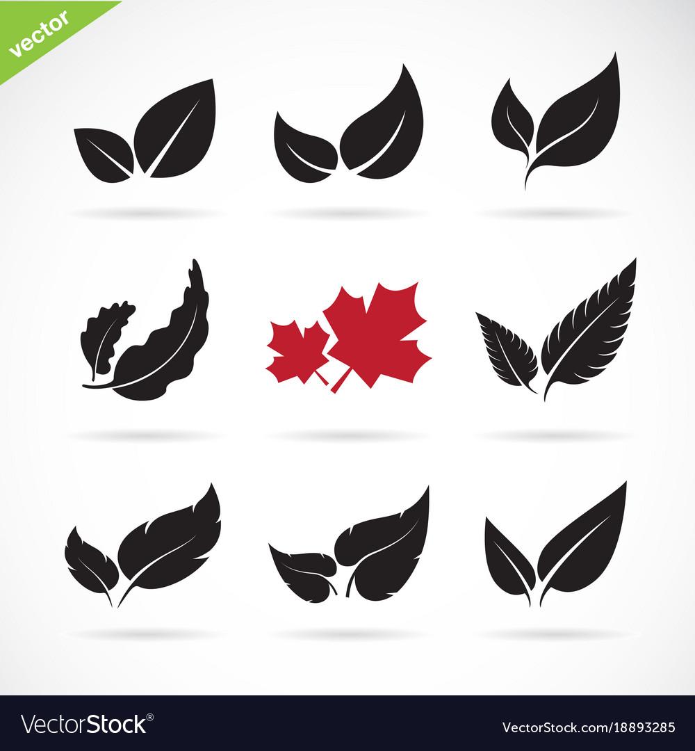 Leaves icon set on white background