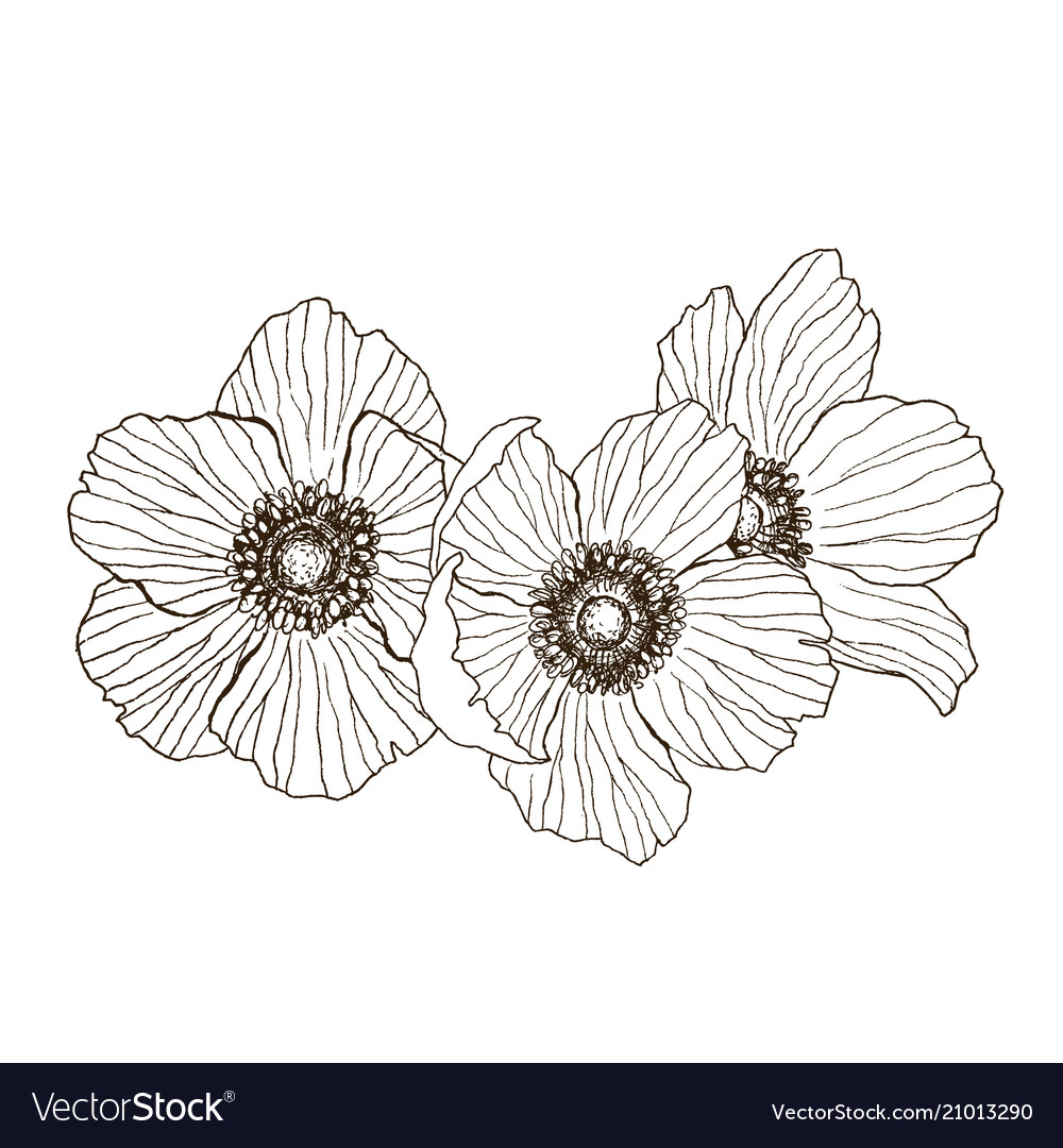 Anemone flower drawing bouquet isolated