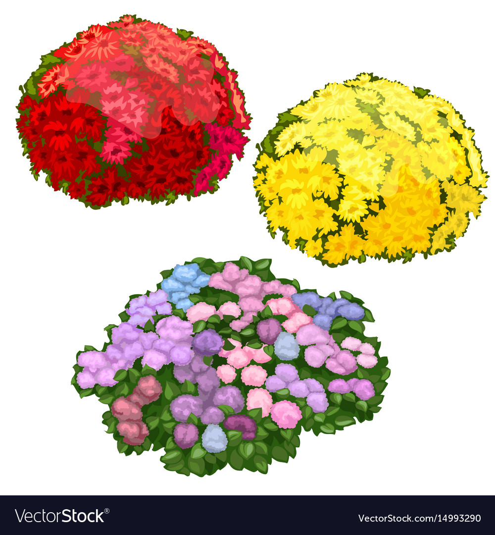 Yellow pink and red flower beds isolated