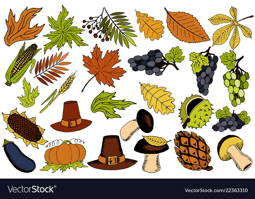 Autumn items for thanksgiving in the