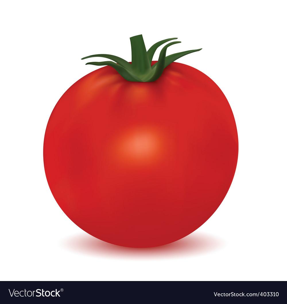 Tomato isolated on white background vector image