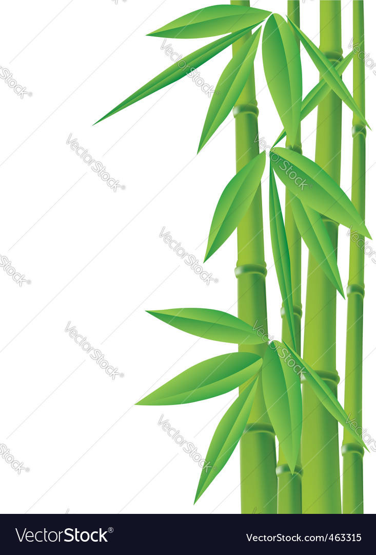 bamboo royalty free vector image vectorstock rh vectorstock com bamboo vector free bamboo vector free