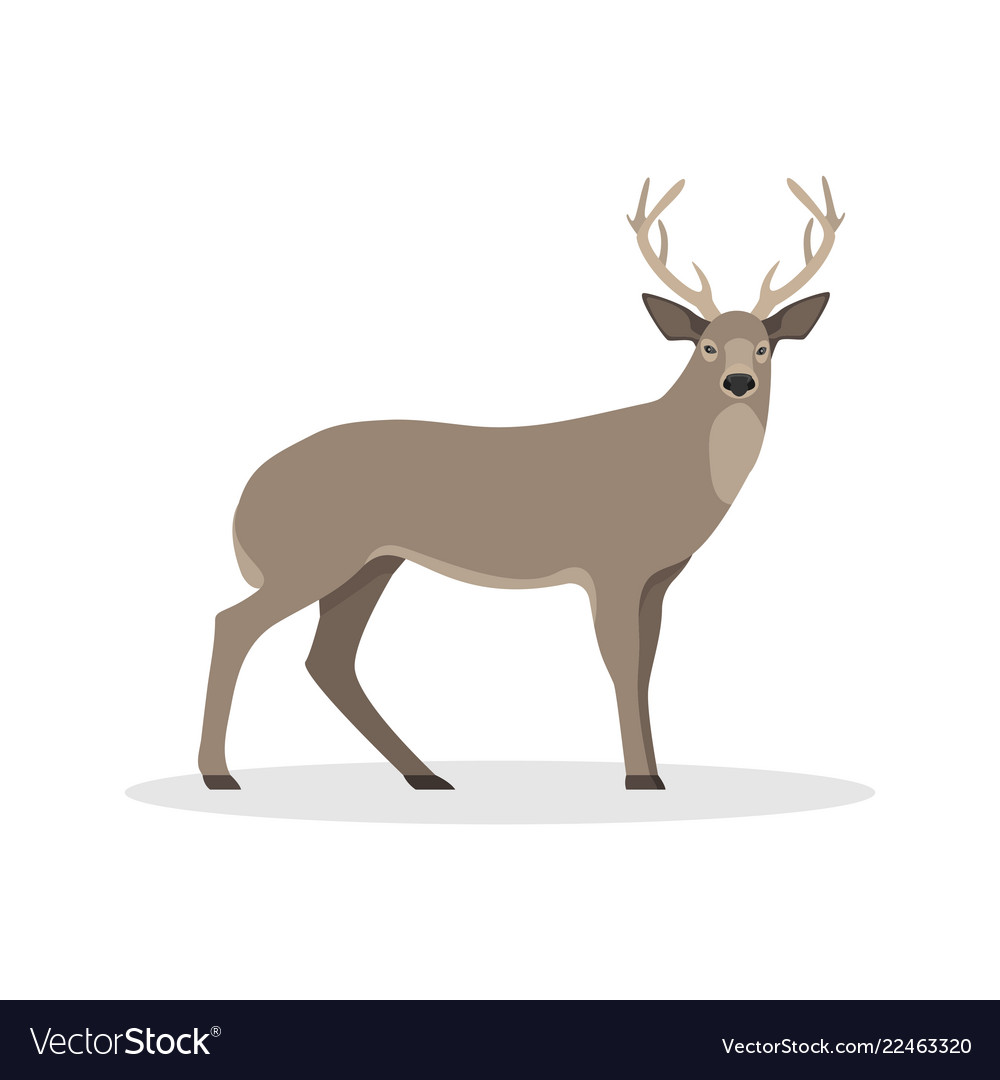 Isolated with a deer