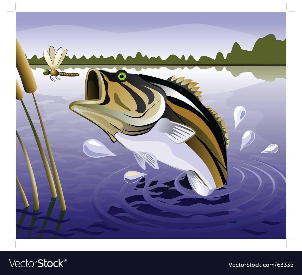 Fresh water fish vector image