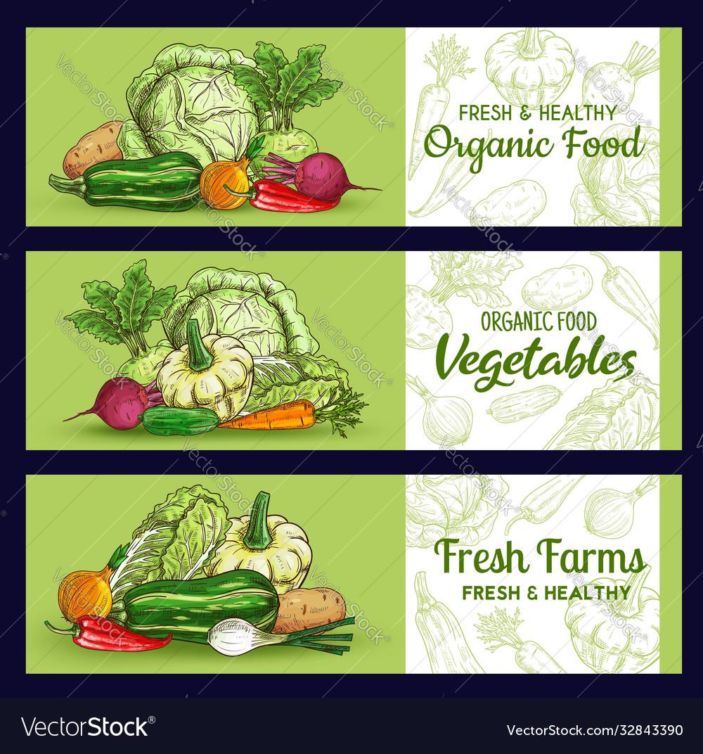 Farm vegetables sketch banners veggies