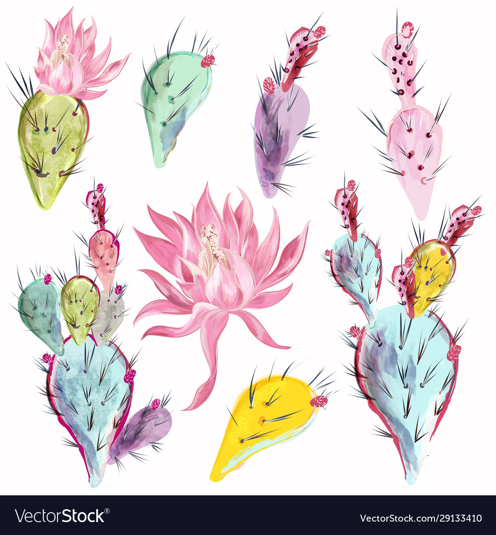 Collection beautiful cactus flowers in